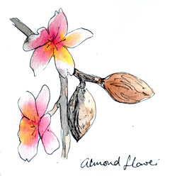 almond-flower-small